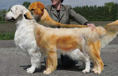 overlaid-dogs